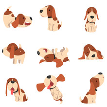 Cute Beagle Dog In Various Pos...