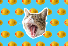 Cat And Rubber Duck Collage, Pop Art Concept Design. Minimal Vibrant Summer Background.