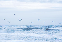 Seagulls Flying Over Stormy No...