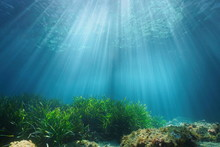 Natural Sunlight Underwater Th...