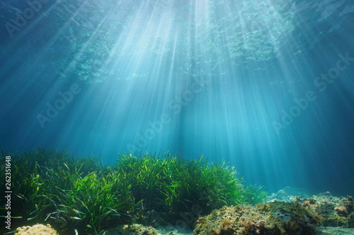 Natural sunlight underwater through water surface with seagrass and rock on the Canvas Print