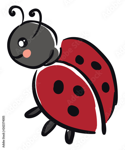 Canvas Prints Ladybugs A small black-colored ladybug vector or color illustration