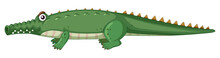 Isolated Crocodile Character White Background