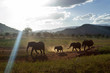 Elephant Family Walking in Africa
