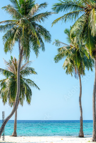 Four palms on a white sand beach next to the blue ocean