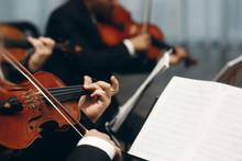 Elegant String Quartet Perform...