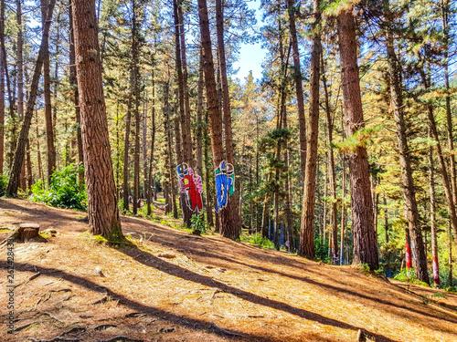 Photo Urdaibai Biosphere Reserve, Bizkaia,Spain; 2018-04-16: Trunks of painted pine in