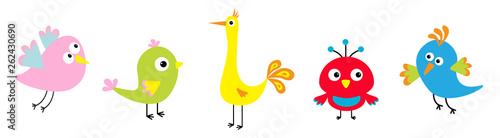 Fototapeta Cartoon bird set line. Cute character. Funny collection for kids. Flat design. Baby illustration. obraz