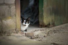 Black And White Cat Hiding Beh...