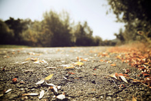 Fallen Leaves View