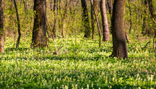 Wild Flowers In Forest