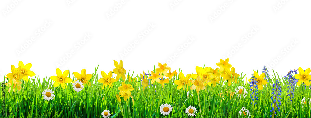 Fototapety, obrazy: a spring flowers and green grass background