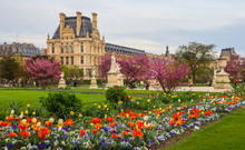 Marvelous Spring Tuileries Garden And View At The Louvre Paris France. April 2019.