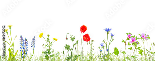 Poster de jardin Poppy grass and wildflowers isolated background