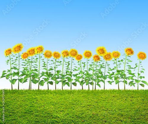 Fototapety, obrazy: a grass and sunflowers at backyard, spring background