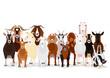 various goats group