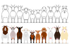 Various Goats Border Set