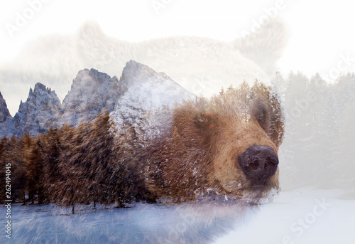 Recess Fitting Polar bear Double exposure of a wild brown bear and a pine forest