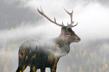 Double Exposure Of A Red Deer ...