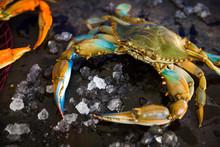 Blue Crab On Ice