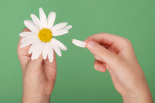 Loves Or Not Loves Me, Plucking Off The Petals Of A Camomile.