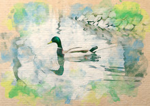 Watercolor Pattern Of Duck Wild Colorful Illustration