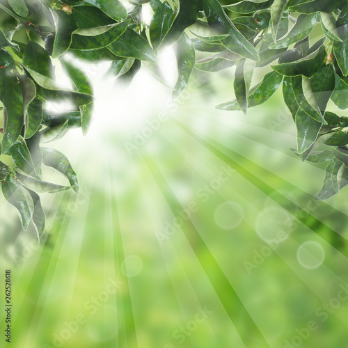 Poster Bamboe Green leaves with sunlight. Natural concept