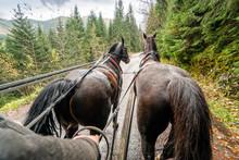 Riding A Horse Drawn Carriage ...