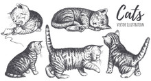 Collection Of Cats Hand Drawing.