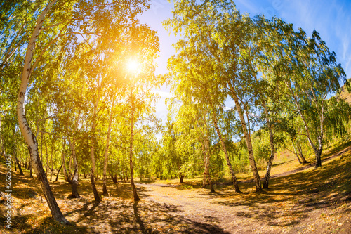 Photo  Green birch trees in summer forest. Fish eye lens effect.