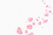Pink Sakura Falling Petals Vec...