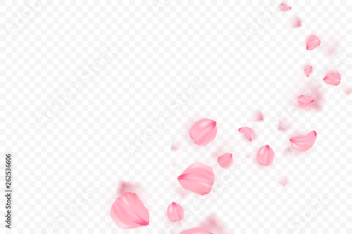 Fotografía Pink sakura falling petals vector background