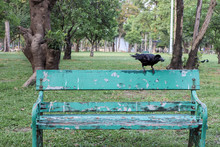 Crow On The Green Bench Ready ...