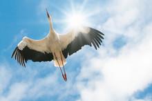 Weißer Storch Fliegt In Blaue...