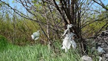 Nature Pollution, Garbage Dump On The Grass Near The Forest Ecological Disaster Concept Polluting Nature And City Park With Litter While Plastic Bag Stuck On The Tree Branch In The Wind