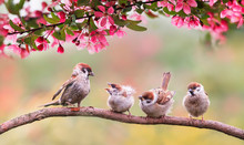 Natural Background With Birds Sparrow With Little Chicks Sitting On A Wooden Fence In The Village Garden Surrounded By Yab Flowers They Have A Sunny Day