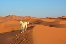 Pustynia, Sahara Zachodnia, Maroko