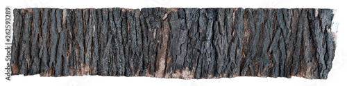 Large piece of tree bark isolated on white Canvas Print