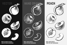 Hand Drawn Apricots And Peaches. Vector Sketch Set