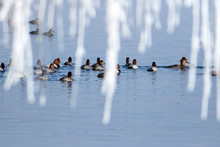 Frozen Lake And Birds. Winter Nature Background.
