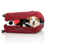 DOG INSIDE A RED MODERN BAGGAGE OR LUGGAGE GOING ON VACATIONS. ISOLATED AGAINST WHITE BACKGROUND.