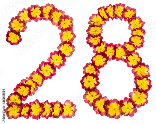Fotografia  Numeral 28, twenty eight, from natural flowers of primula, isolated on white bac