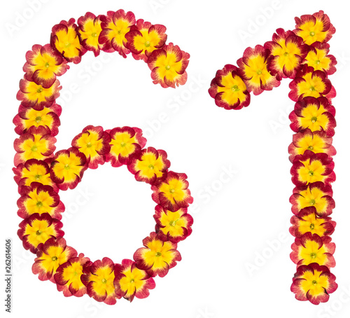Fotografia  Numeral  61, sixty one,from natural flowers of primula, isolated on white backgr