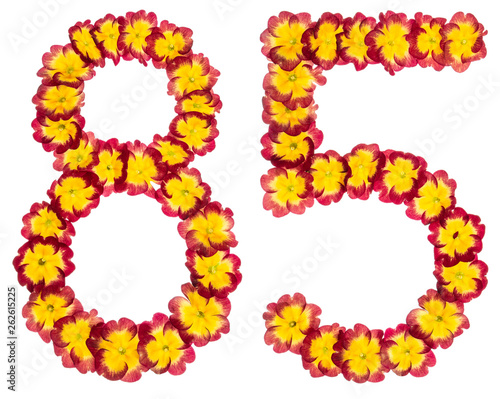 Fotografia  Numeral 85, eighty five, from natural flowers of primula, isolated on white back