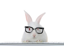 Portrait Of An Adorable White Albino Baby Bunny Rabbit Wearing Intelligent Geeky Looking Black Glasses, Paws On Computer Keyboard Looking Directly At Viewer As If Looking At Computer Monitor. Isolated