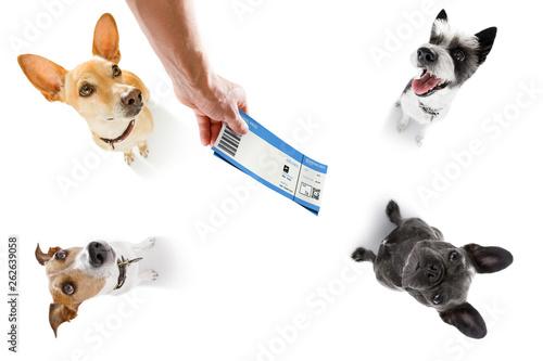 Photo sur Aluminium Chien de Crazy dog on vacation holidays and ticket