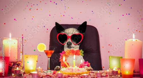 Photo sur Aluminium Chien de Crazy happy birthday dog