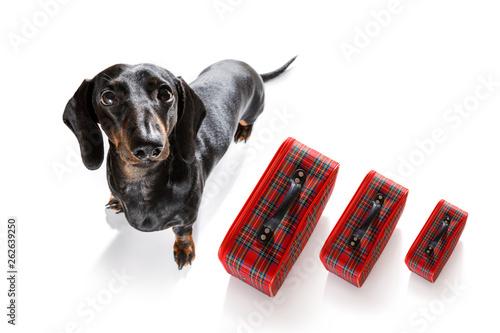 Photo sur Aluminium Chien de Crazy dog on vacation