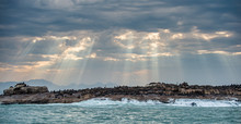 Seascape. The Colony Of Seals On The Island. The Rays Of The Sun Through The Clouds In The Dawn Sky, The Waves Breaking On The Rocks. False Bay. South Africa.