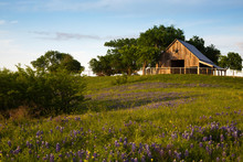 Wood Barn On The Bluebonnet Tr...